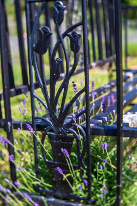 Pick you own lavender farm